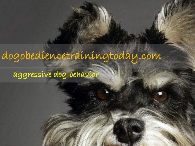 dogobediencetrainingtoday.com  aggressive dog behavior