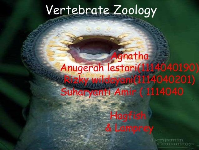 Vertebrate Zoology             Agnatha  Anugerah lestari(1114040190)   Rizky wildayani(1114040201)  Suharyanti Amir ( 1114...