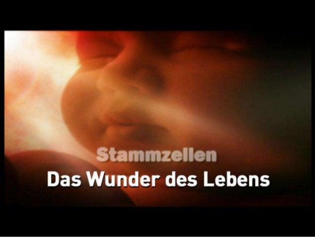 Wie entstehen Stammzellen? unbefruchtete EizelleChromosomenverschmelzung Quelle: National Geographic – Das Wunder des Lebe...