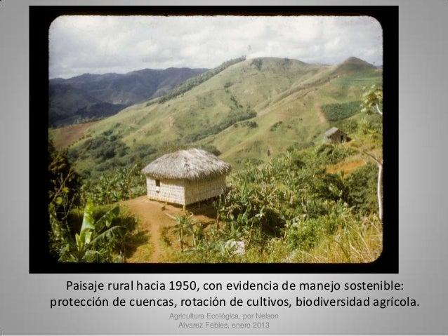 Agricultura ecol gica y producci n de alimentos en puerto rico for Rotacion cultivos agricultura ecologica
