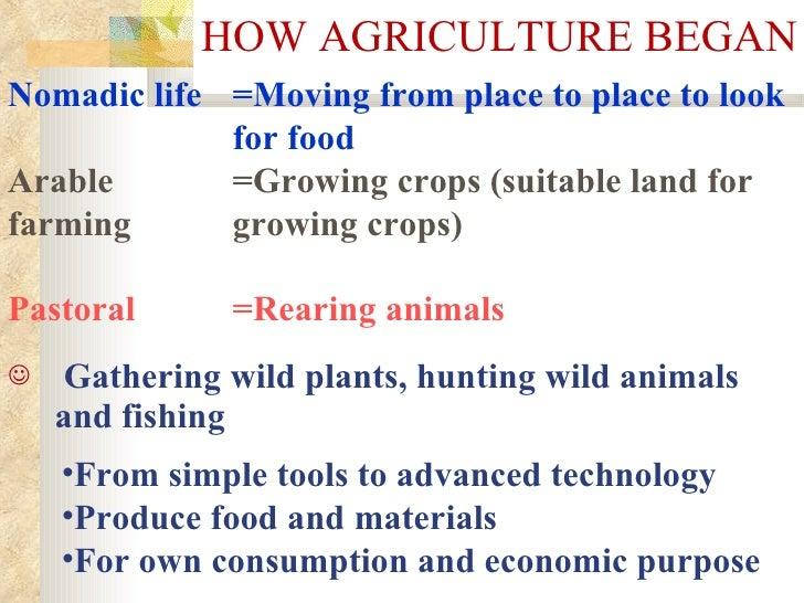 HOW AGRICULTURE BEGAN <ul><li>Gathering wild plants, hunting wild animals and fishing   </li></ul><ul><li>From simple tool...