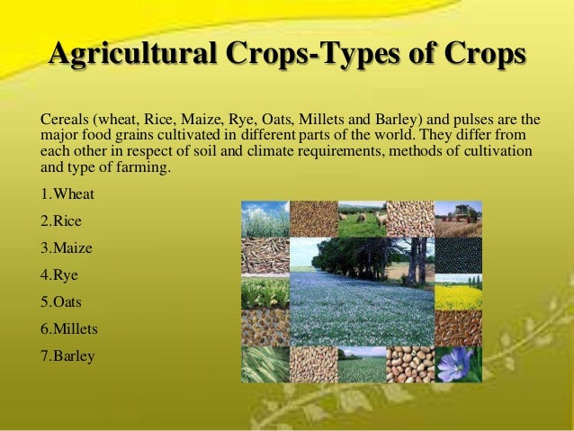 Agricultural Crops Images Agricultural Crops-types of