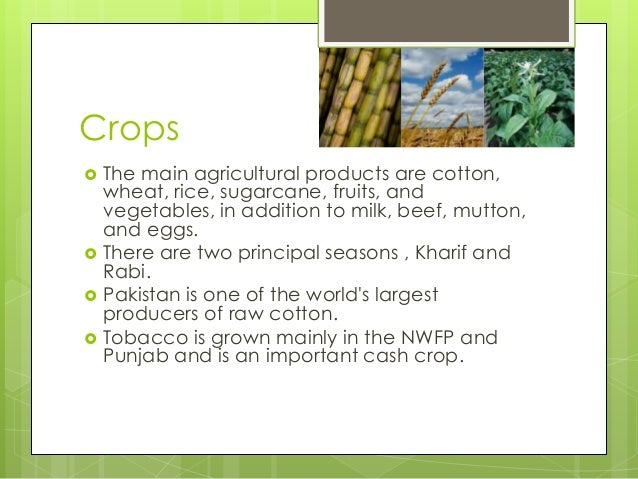 cash crops in pakistan essay Cach crop of pakistan essay quotes - 1 terrorism is a big danger to pakistan's independence we will fight this danger for the sake of independence of pakistan and.