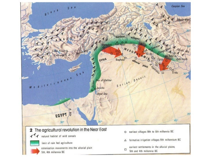 The First Agricultural Revolution-            Animal Domestication• Animals such as goats,  pigs and sheep were  domestica...