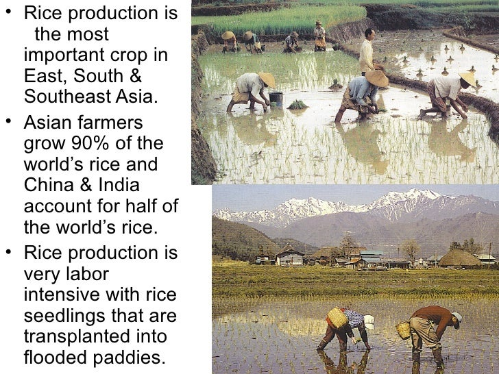 • Rice production is    the most  important crop in  East, South &  Southeast Asia.• Asian farmers  grow 90% of the  world...