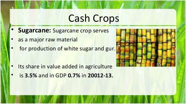 cash crops of pakistan essays