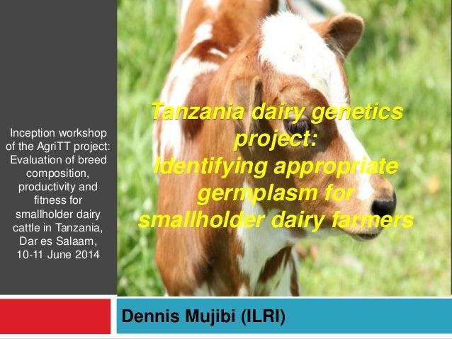 Tanzania dairy genetics project: Identifying appropriate germplasm for smallholder dairy farmers Dennis Mujibi (ILRI) Ince...