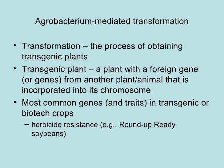 Agrobacterium-mediated transformation• Transformation – the process of obtaining  transgenic plants• Transgenic plant – a ...