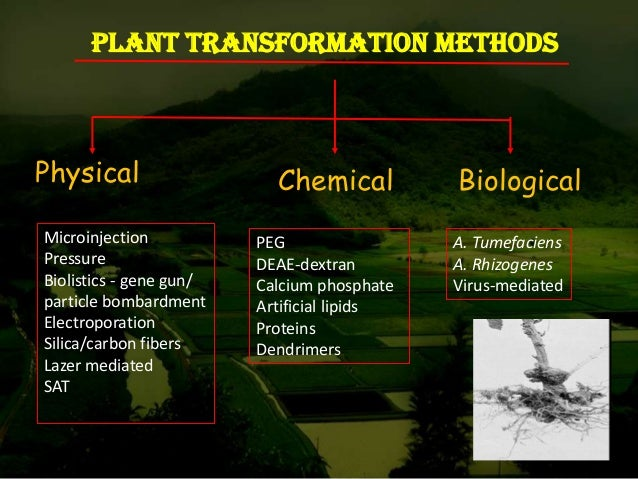 Research Paper On Plants
