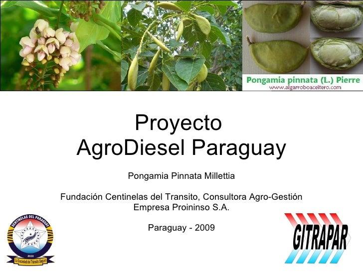 Proyecto  AgroDiesel Paraguay Pongamia Pinnata Millettia Fundación Centinelas del Transito, Consultora Agro-Gestión Empres...