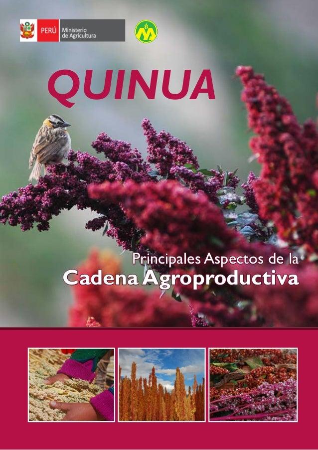 Cadena agroproductiva de la Quinua  QUINUA  Principales Aspectos de la  Cadena Agroproductiva  1