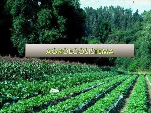 DEFINICION Ecosistema donde todos o algunos de los  componentes naturales, silvestres han sido  sustituidos por especies ...