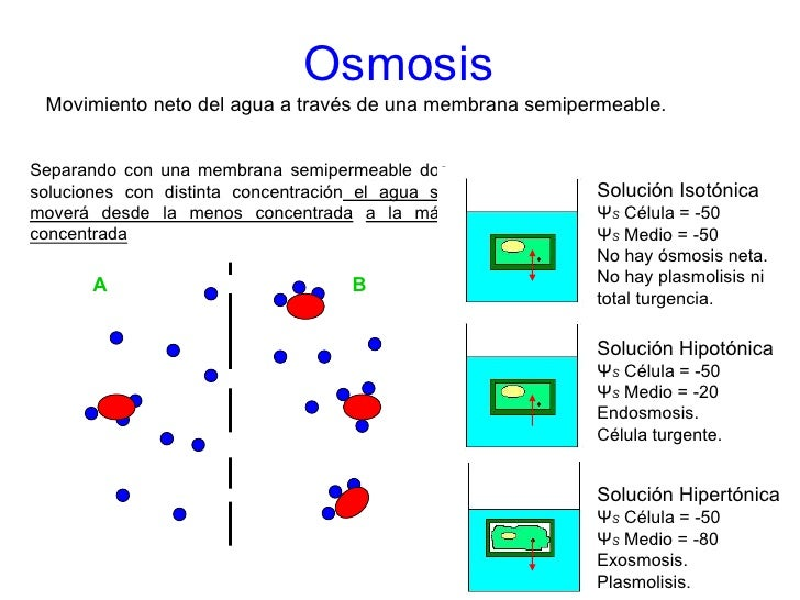 osmosis in a cell
