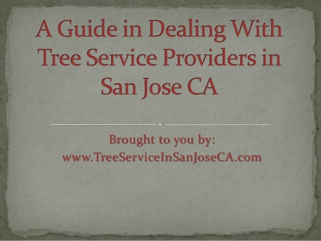 A Guide in Dealing With Tree Service Providers in San Jose CA