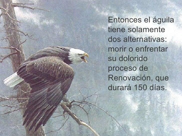 Se como el Águila (Luchar o Morir)