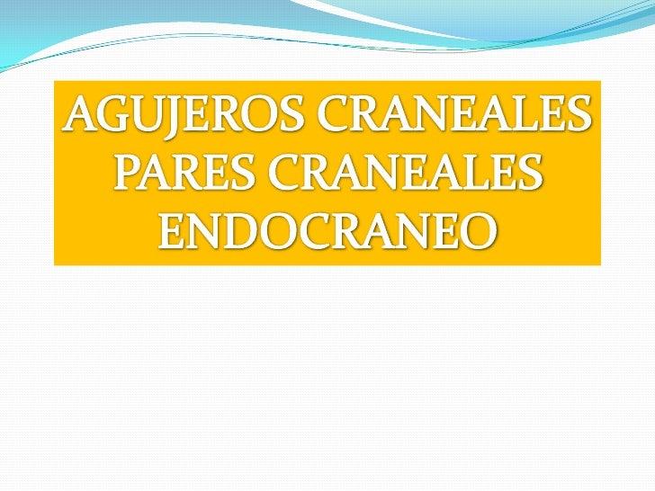AGUJEROS CRANEALES<br />PARES CRANEALES<br />ENDOCRANEO<br />