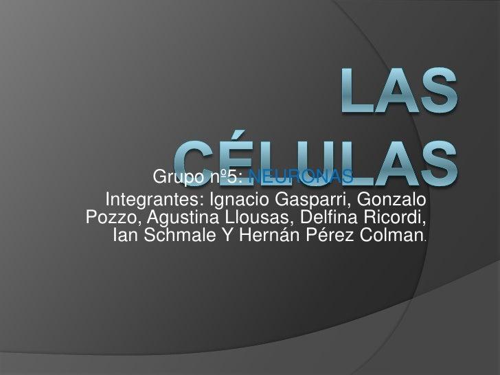 Las células <br />Grupo nº5: NEURONAS<br />Integrantes: Ignacio Gasparri, Gonzalo Pozzo, Agustina Llousas, Delfina Ricordi...