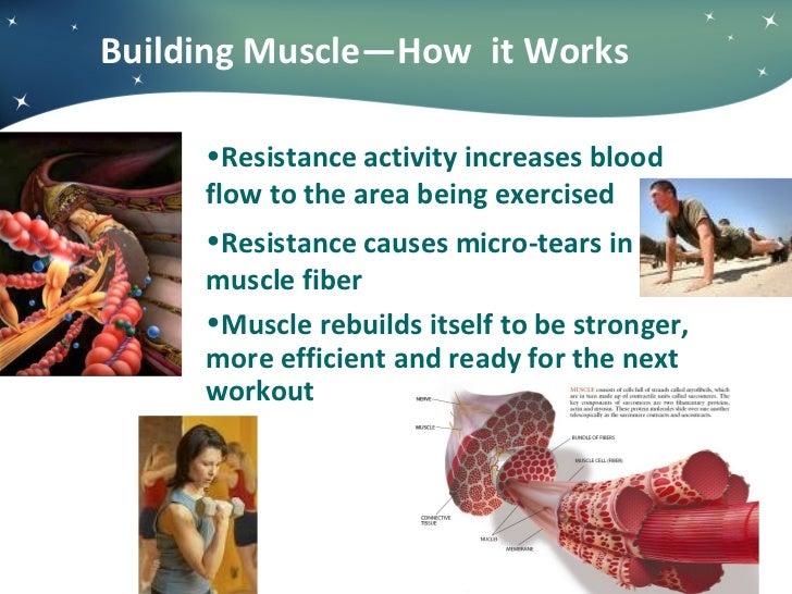 Building Muscle—How  it Works <ul><li>Resistance activity increases blood  </li></ul><ul><li>flow to the area being exerci...