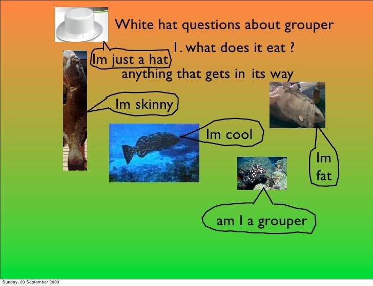 White hat questions about grouper                                           1. what does it eat ?                         ...
