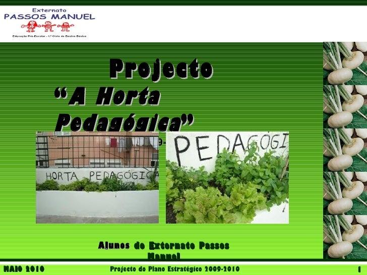 """Projecto            """" A Horta            Pedagógica """"                          2009-2010               Alunos do Externato..."""