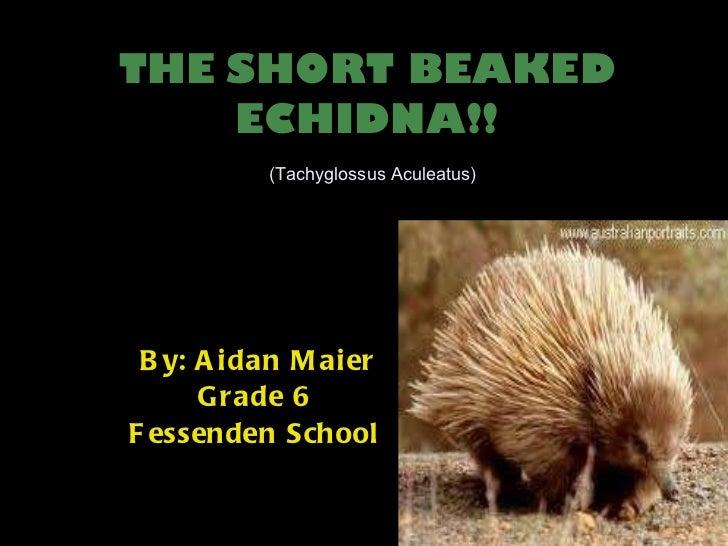 THE   SHORT BEAKED ECHIDNA!!   (Tachyglossus Aculeatus) By: Aidan Maier Grade 6 Fessenden School