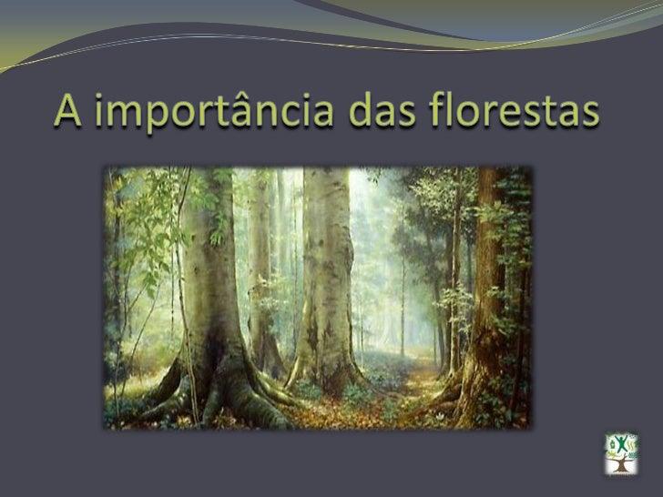 A importância das florestas<br />