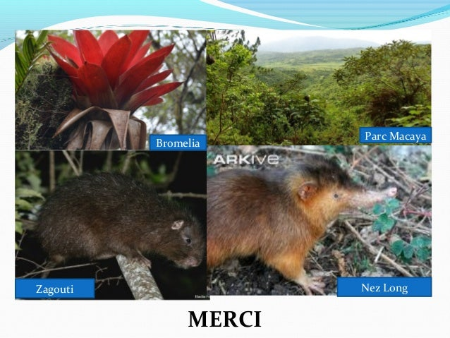 Anap aires protegees presentation conseil des ministres for Hopital canape vert haiti
