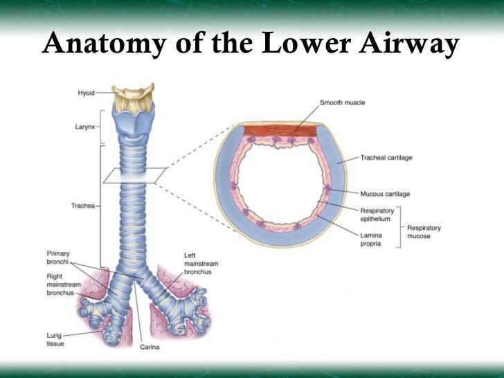 Intubation Anatomy