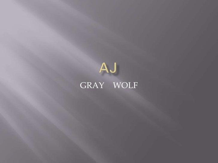 The Grey Wolf by AJ