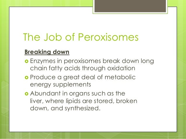 A journey into lysosomes and peroxisomes