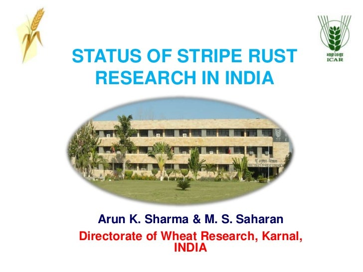 STATUS OF STRIPE RUST RESEARCH IN INDIA