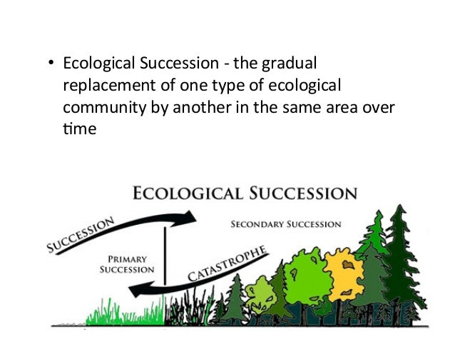 ecological succession 2