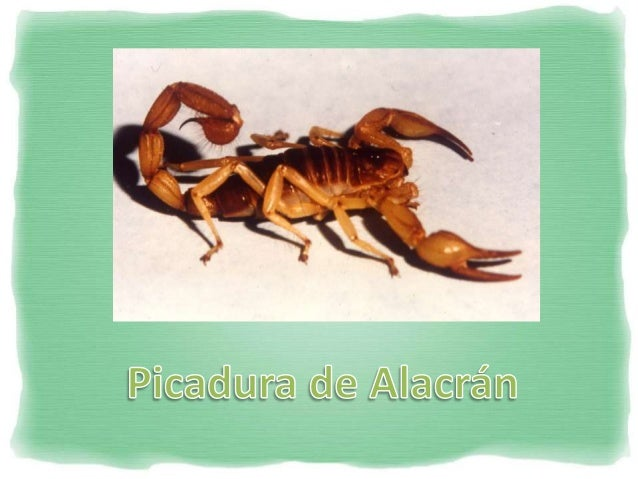 Picadura de Alacrán