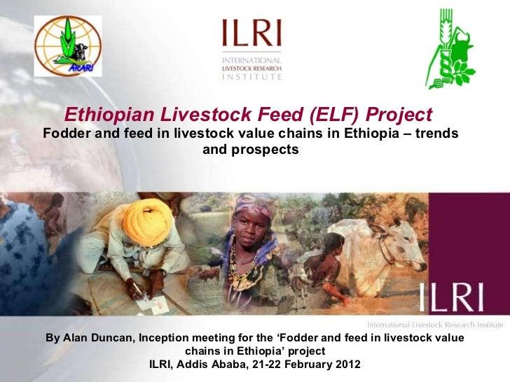Ethiopian livestock feed (ELF) project: Fodder and feed in livestock value chains in Ethiopia