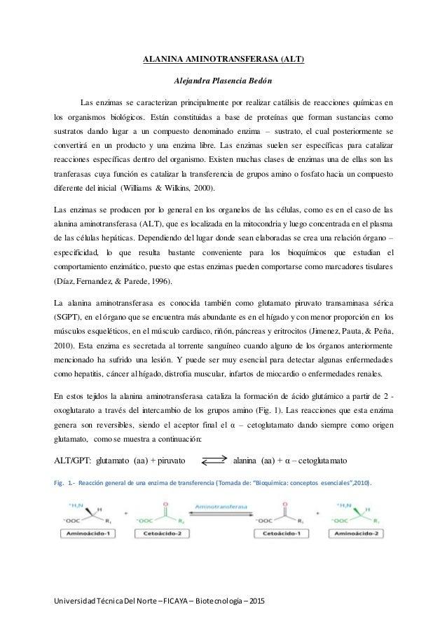 UniversidadTécnicaDel Norte –FICAYA – Biotecnología– 2015 ALANINA AMINOTRANSFERASA (ALT) Alejandra Plasencia Bedón Las enz...