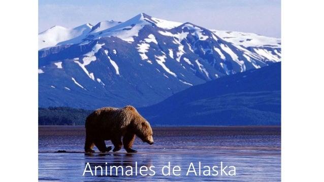 Animales de Alaska