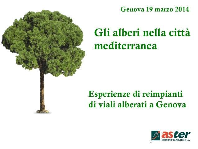 Genova 19 marzo 2014 Gli alberi nella città mediterranea Esperienze di reimpianti di viali alberati a Genova