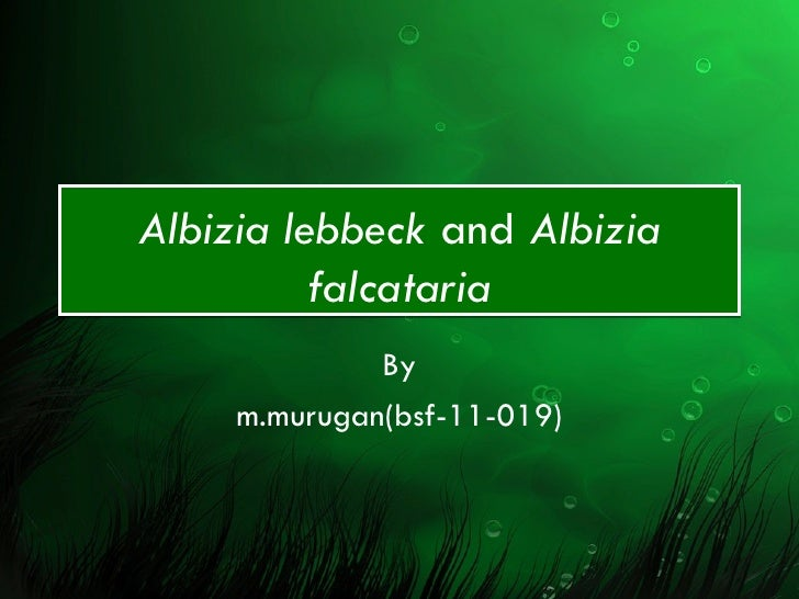 Albizia lebbeck and albizia falcataria final