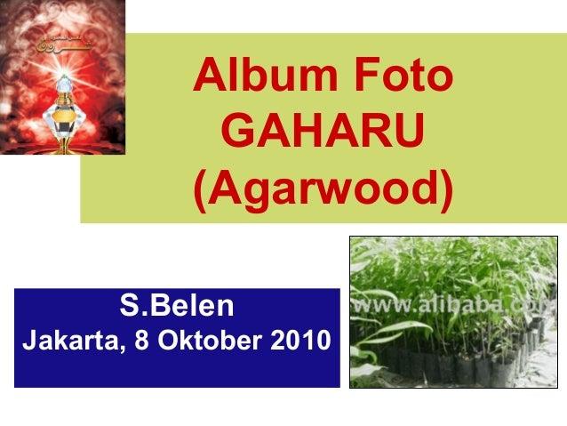 Album FotoGAHARU(Agarwood)S.BelenJakarta, 8 Oktober 2010