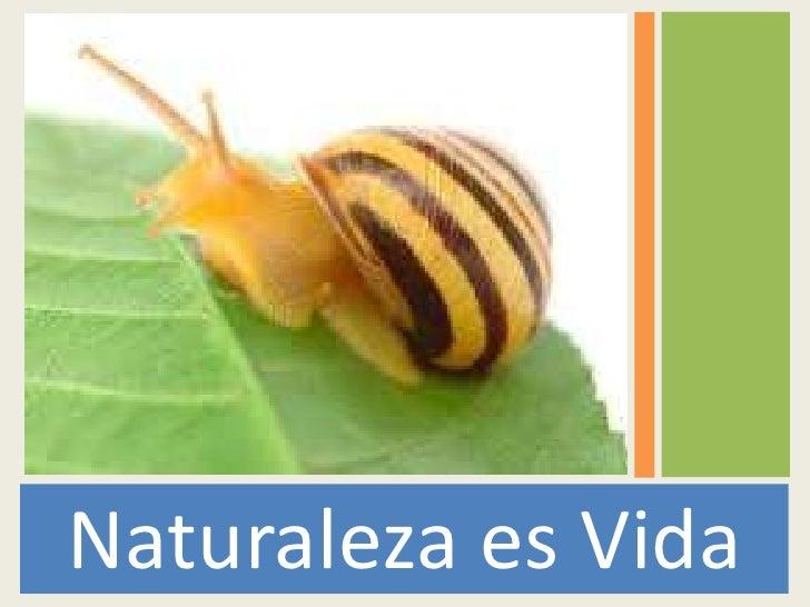 Naturaleza es Vida