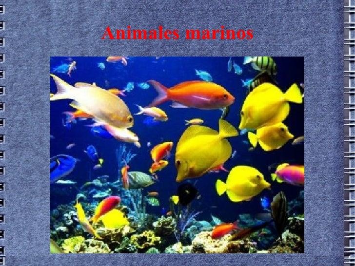 Álbum de animales marinos