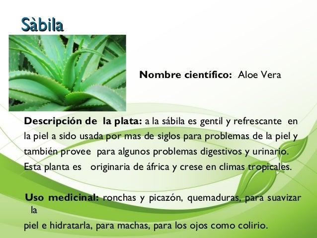 Tipos de plantas medicinales y su uso - Clase de flores y sus nombres ...