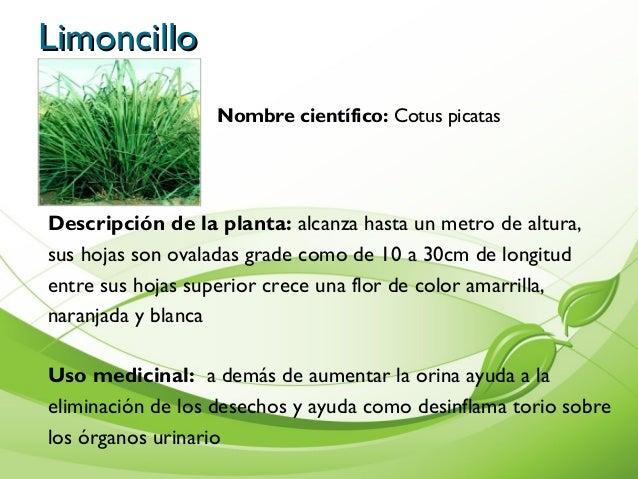 Album de plantas for Hojas ornamentales con sus nombres