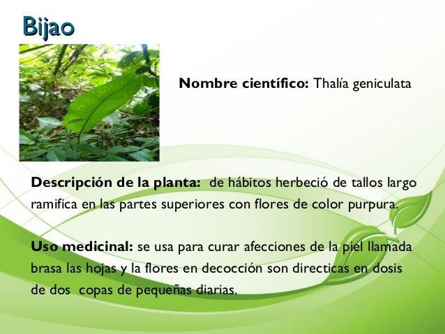 Album de plantas for Para q sirven las plantas ornamentales
