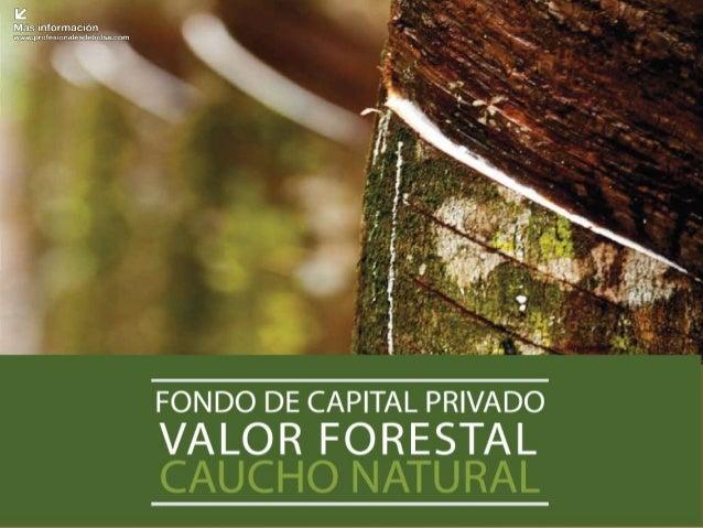 """Álbum FOTOGRÁFICO Fondo de Capital Privado """"Valor Forestal""""  Primer semestre 2013 - 2"""