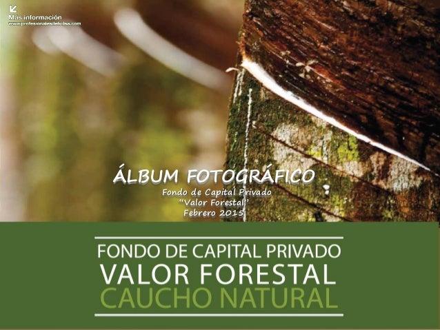 "ÁLBUM FOTOGRÁFICO Fondo de Capital Privado ""Valor Forestal"" Febrero 2015"