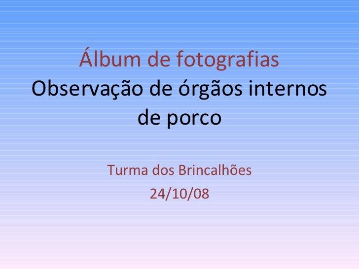 Álbum de fotografias  Observação de órgãos internos de porco Turma dos Brincalhões 24/10/08