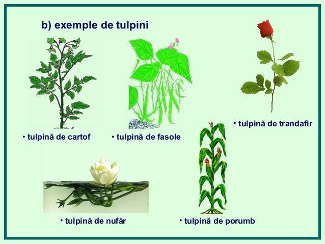 Alcatuirea Plante 638 Cb Imagini