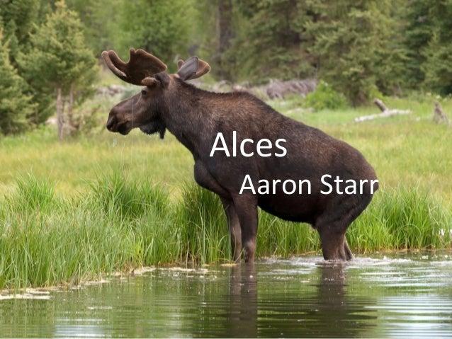 AlcesAaron Starr