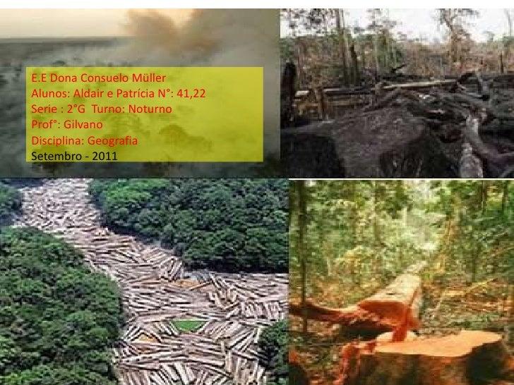 O problema do desmatamento - Aldair 2º G
